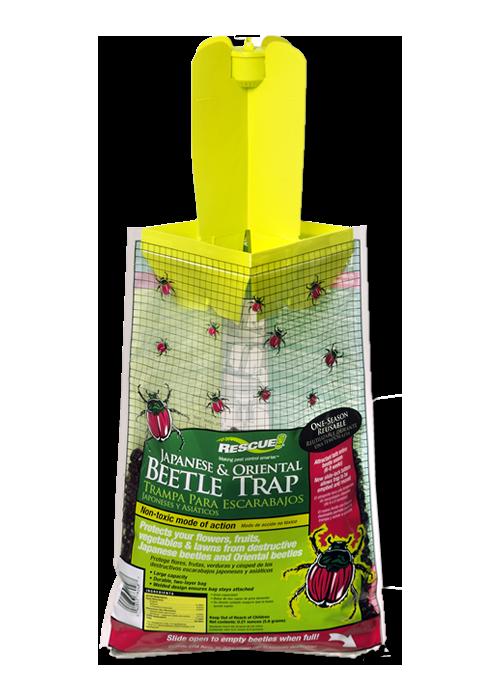Beetle Trap - Japanese & Oriental Image